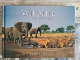 WILDLIFE-an untamed beauty south africa(精装英文原版)
