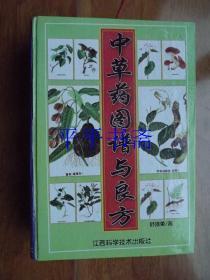 中草藥圖譜與良方(32開精裝 06年一版一印)