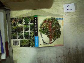 觀葉植物的家庭栽培