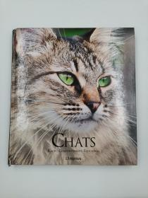 chats races comportements education 猫画册 非英文