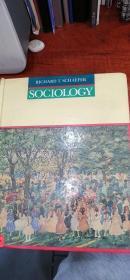 sociology(社會學)