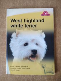 west highland white terier  狗。
