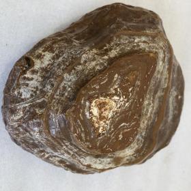 """瑪瑙奇石""""大鮑魚"""",瑪瑙原石,象形瑪瑙,奇石瑪瑙,""""鮑魚"""",瑪瑙奇石""""海鮑魚""""大塊頭重達4斤多收藏珍品"""