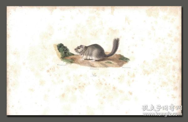 """1824 Hand-painted lithograph """"The Sleeping Mouse"""""""