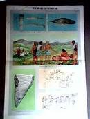 社会发展史挂图:奴隶社会【全套12幅全、58年承名世等名家彩图绘画印刷、请看图】