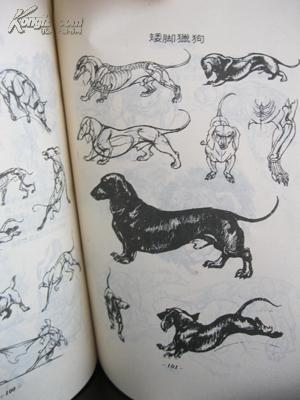 动物画素描法 (馆藏)