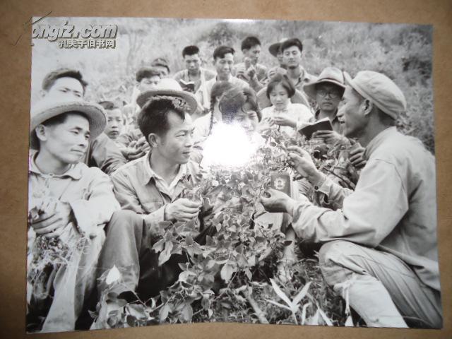 文革老照片(5)手拿红宝书学习中草药[18.5cm*24.3cm]