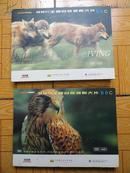 英国bbc王牌自然探索大片《为生存而杀戮》《飞禽传》2本合售 一共23盘光碟全 9.5品包邮资