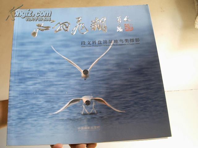 心羽飞翔:段文科盘锦湿地鸟类摄影