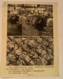新闻图片-《共和国五十年》之18、1960年我国遭受严重的自然灾害、苏联撤走专家
