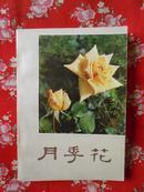 月季花(插图本,私藏九五品)