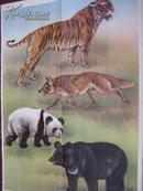 中学生物学教学挂图 脊椎动物――哺乳纲 虎.狼.黑熊.熊猫