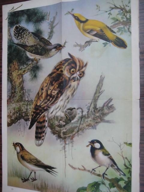 中学生物学教学挂图 脊椎动物――鸟纲 第二辑 益鸟
