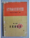(上海人民) 农作物病虫害彩色图册 第一分册 水稻病虫害