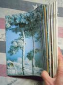 旅游 1996 1--12   s22/=39/36元 上海电大通讯 经济月刊 1984 1--12/36元