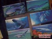 海洋动物园知识图片企鹅和鲨鱼共4盒合售
