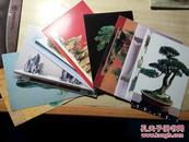 盆景艺术 明星片 (全套九张)