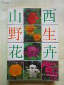 山西野生花卉
