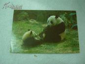 明信片  动物大熊猫、黑猩猩、金丝猴、戴冕鹤/单出每张5元