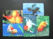 中国艺术图卡--金鱼(5枚套)