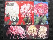 中国艺术图卡--菊花(5枚套)