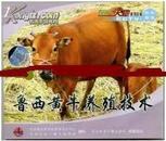 鲁西黄牛养殖技术视频大全,如何养殖鲁西黄牛