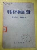 中国农作物病虫图谱  (第 八分册 糖烟病虫)   彩图