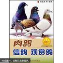 信鸽饲养与训练图书 赛鸽观赏鸽养殖技术书籍 肉鸽信鸽观赏鸽