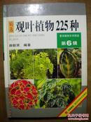景观植物实用图鉴6:精选观叶植物225种