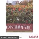 红叶石楠栽培书 红罗宾种植书 种红唇书 红叶石楠繁育与推广邱国金