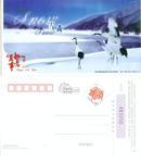 2007年生肖猪年贺年有奖邮资明信片--(鹤图)雪舞