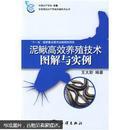 泥鳅鱼养殖技术书籍 泥鳅高效养殖技术图解与实例