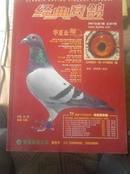 经典赛鸽2007第1期