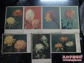 50-60年代《菊花》明信片【7张合售】