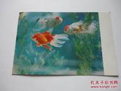 明信片·金鱼
