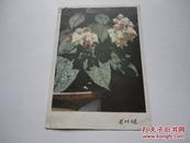 明信片 花卉(4)