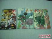 花卉2001年3,5,6期3册【060】