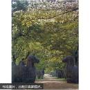 (中国美术分类全集)中国建筑艺术全集7  明代陵墓建筑(正版真品-现货-精装) 全新未拆封