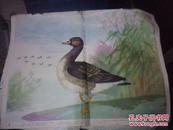 幼儿园认识自然教学图片常见动物 14(2.13.14)《牛.燕.啄木鸟》三张 沈绍伦 画  上海教育出版社