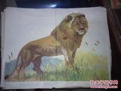 幼儿识字自然教学图片 野兽14(1.3.5.9.10.11.12.13.14)9张  哈琼文画