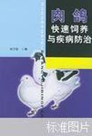 肉鸽快速饲养与疾病防治