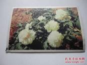 明信片 花卉(2)