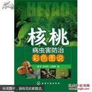 核桃树栽培技术书 种核桃树书 核桃病虫害防治彩色图说