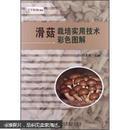 食用菌滑菇栽培技术大全/滑菇种植技术/滑菇病虫害防治1光盘1书籍