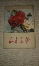 花卉集锦    1964初版   1套12枚无格明信片