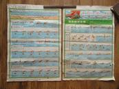 73年出版的《游泳辅导挂图》2张 8开品一般 其中一张顶端图版为横渡长江武汉渡江节内容