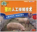 猪人工授精技术视频,母猪如何人工授精