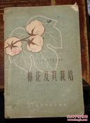 棉花及其栽培