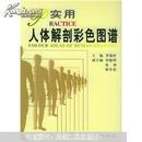 实用人体解剖彩色图谱 李瑞祥 人民卫生出版社 9787117041485