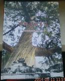 邯郸古树名木(16开精装画册)内有大量图片  正版现货
